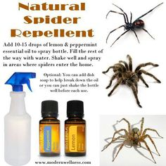 Natural spider repellent- lemon and peppermint essential oils Natural Spider Repellant, Bug Spray Recipe, Diy Pest Control, Essential Oil Uses, Essential Oil For Spiders, Insect Repellent, Natural Cleaning Products, Household Products, Household Cleaners
