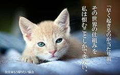 Cream Cat, Funny Animals, Dog Cat, Photoshop, Pets, Kittens, Smile, Twitter, Cute Kittens