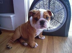 We might need to bring this litte guy in as the office mascot!