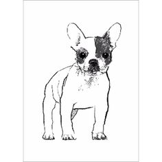 Tiff Howick French Bulldog (£60) ❤ liked on Polyvore featuring home and home decor