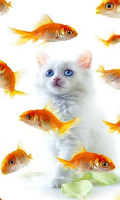 Hi dears, dont worry, I just want to look at you, so just quietly. Animals And Pets, Baby Animals, Funny Animals, Cute Animals, I Love Cats, Crazy Cats, Beautiful Cats, Animals Beautiful, Kittens Cutest