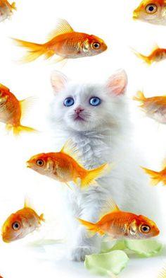 Πως μου αρέσουν τα ψάρια!!!