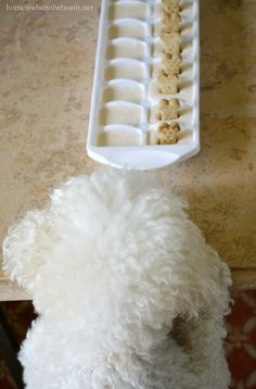Quick and Easy Frozen Dog Treats for Summer, aka Copycat Frosty Paws – Home is Where the Boat Is Homemade Dog Treats, Pet Treats, Dog Biscuit Recipes, Dog Food Recipes, Frosty Paws Recipe, Love Your Pet Day, Frozen Dog Treats, Mini Dogs, Dog Biscuits
