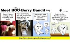 Meet BOO Berry Bandit (BBB): Marley and Boo Berry Bandit