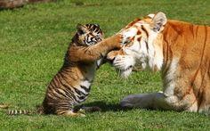Animals-Photos-In-Strange-Moments-7