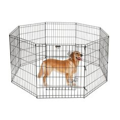 The most thorough, step-by-step guide on how to crate train a puppy you can find. Highly detailed, Including what to do at night and if you work full time. #puppytrainingcrateatnight