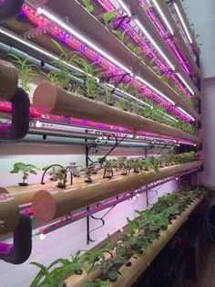 Hydroponic Gardening Ideas Shenzhen factory led hydroponic led grow tube for edible amaranth - Hydroponic Farming, Indoor Aquaponics, Aquaponics Greenhouse, Hydroponic Growing, Aquaponics System, Aquaponics Plants, Hydroponic Lights, Vertical Farming, Diy Kit