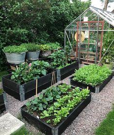 Efter en morgonrunda i trädgården kan jag konstatera att det växer så det knakar, både i pallkragar och rabatter. Ha en skön…