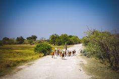Hakusembe River Lodge, Namibia – Romantische Idylle und Beach-Feeling am Okavango River | Beautiful Places for Lovers!