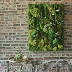 How to Build a Decorative Moss Wall - Farm and Garden - GRIT Magazine You can revamp your living or work space with this guide to modern interior design using succulents, air plants, terrariums, moss walls and more. Moss Wall Art, Moss Art, Diy Wall Art, Plant Wall Diy, Wall Decor, Vertical Plant Wall, Faux Plants, Indoor Plants, Indoor Gardening