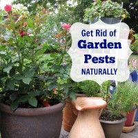 Top 10 Ways to Remove Garden Pests Naturally