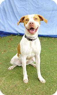 Adopt A Dog Inverness Florida
