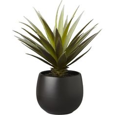 CB2 Potted Succulent With Black Pot (€9,20) ❤ liked on Polyvore featuring home, home decor, floral decor, plants, fillers, decor, black, succulent pots, cb2 and black home decor