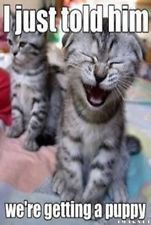 Day = made i love cats and cat memes - laughing cat meme Funny Animal Quotes, Animal Jokes, Cute Funny Animals, Cute Baby Animals, Funny Cute, Cute Cats, Cat Quotes, Cute Animal Humor, Animal Food