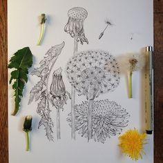 Dandelion II | Illustration by Noel Badges Pugh