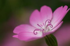 Flower-Photography