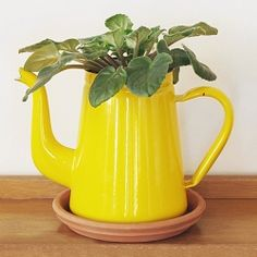 A new spin on houseplants... use household items instead of clay pots!