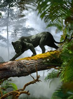 Many Strange Tales Are Told Of This Jungle by Michael Heath Black Panther Cat, Black Panther Tattoo, Big Cats Art, Cat Art, Black Jaguar Animal, Animals Beautiful, Cute Animals, Image Nature, Strange Tales