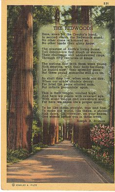 Vintage Postcard: The Redwoods - poem by Joseph Strauss | Flickr - Photo Sharing!