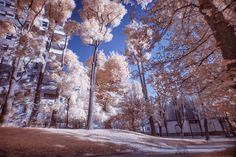 Infrared Park by Riccardo Bertani on 500px