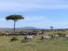 Kenya -- or somewhere in Africa