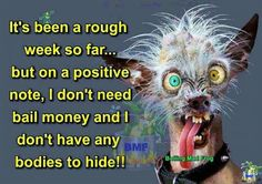 It's been a rough week so far but on a positive note, I don't need bail money and I don't have any bodies to hide! Crazy Quotes, Funny Quotes, Funny Images, Funny Pictures, Bail Money, Bad Week, Work Motivational Quotes, Work Quotes, Uplifting Quotes