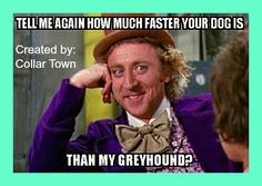 Adopt a greyhound, and watch how many people say how much faster their dog is! ;)   www.collartown.etsy.com  #greyhound #adopt #adoptagreyhound