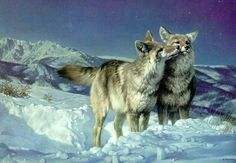 Nancy Glazier Artist | NancyGlazier () - *Starry, Starry Night-Coyotes*