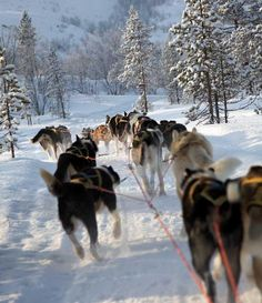 Dog sledging is one of many activities you can enjoy while visiting Kirkenes during the winter! — em Kirkenes.