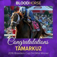Tamarkuz- Breeders' Cup Dirt Mile