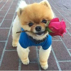 Cute animals - These Cuddly Puppies Will Put Smile on Your Face Little Puppies, Cute Dogs And Puppies, I Love Dogs, Doggies, Cute Little Animals, Cute Funny Animals, Beautiful Dogs, Animals Beautiful, Cute Baby Dogs