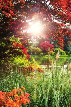 Sunny environment by Sean Gladwell on 500px