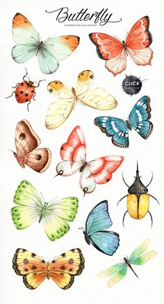 color palette copies The set of high quality hand painted watercolor butterfly images in bright and fresh color palette. Included moth, dragonfly and ladybug. What do you get: 21 x Butterfly Images, Butterfly Drawing, Butterfly Watercolor, Butterfly Colors, Butterfly Artwork, Monarch Butterfly, Illustration Papillon, Butterfly Illustration, Watercolor Clipart