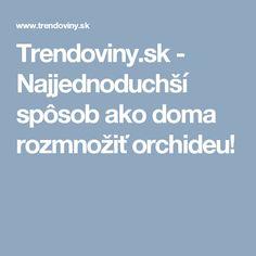 Trendoviny.sk - Najjednoduchší spôsob ako doma rozmnožiť orchideu!