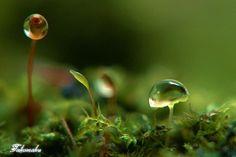 moss(コケの森で)