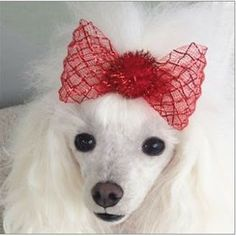 Dog Boutique, Designer Dog Clothing and Accessories for your Dog: Hair Bows, Harnesses Add Style and Color to Any Do...