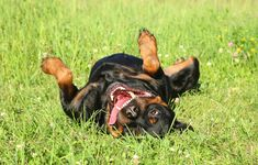 We all love our dogs, but some of us are a little more dog savvy than others. That's not a bad thing, so long as you're willing to learn. While you might feel that your unruly pup is stressing you …