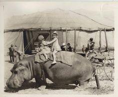Hippo ride