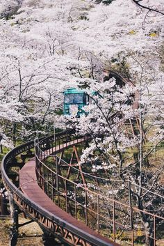 Cherry Blossom, Japan. Find cheap flights at best prices : http://jet-tickets.com/?marker=126022