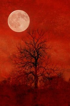 A Witches Harvest Moon 8 X 12 Fine Art Photograph