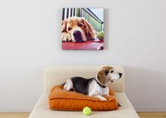 "A Pet Portrait Canvas Print | Enter to win a free canvas print from CanvasPop simply by repinning from our ""CanvasPop Pin to Win Contest"" board 