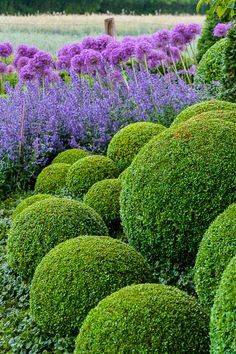 I would never choose to dedicate the energy it would take to make these spherical hedges (admittedly, nor the talent) but I have to admit this combination is rather well put together.