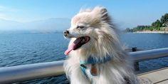 Suene Fernandes: Cães: 9 cuidados com o pet no verão