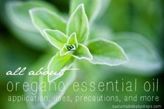 Do you know about Oregano Essential Oil?