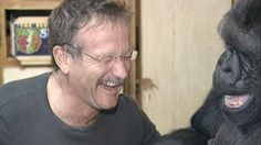 "Koko's Tribute to Robin Williams   ""AWESOME"""
