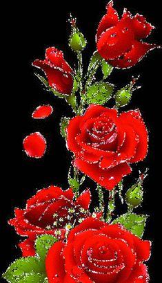 1 million+ Stunning Free Images to Use Anywhere Beautiful Rose Flowers, Flowers Gif, Beautiful Flowers Wallpapers, Beautiful Flower Arrangements, Flowers Nature, Love Flowers, Beautiful Love Pictures, Beautiful Gif, Rose Flower Wallpaper