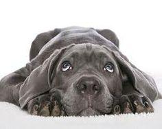 Visit us at www.facebook.com/... The Classy Dog is a luxury online dog boutique. Designer dog clothes, luxury dog beds, designer dog carriers, designer dog collars and leashes, crystal dog collars, designer dog dresses, luxury dog sweaters, luxury doghouses, dog spa and grooming, designer dog bowls. www.theclassydog.com