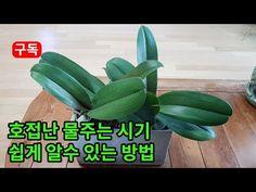 Orchids, Vegetables, Plants, Vegetable Recipes, Plant, Veggies, Planets, Orchid
