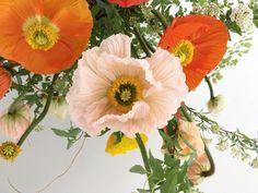 Fast Flower Video: Poppies, Maidenhair Fern, Spirea and Kumquats from Team Flower