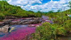 Rio colorido encanta turistas no interior da Colômbia - 06/04/2018 - UOL Universa